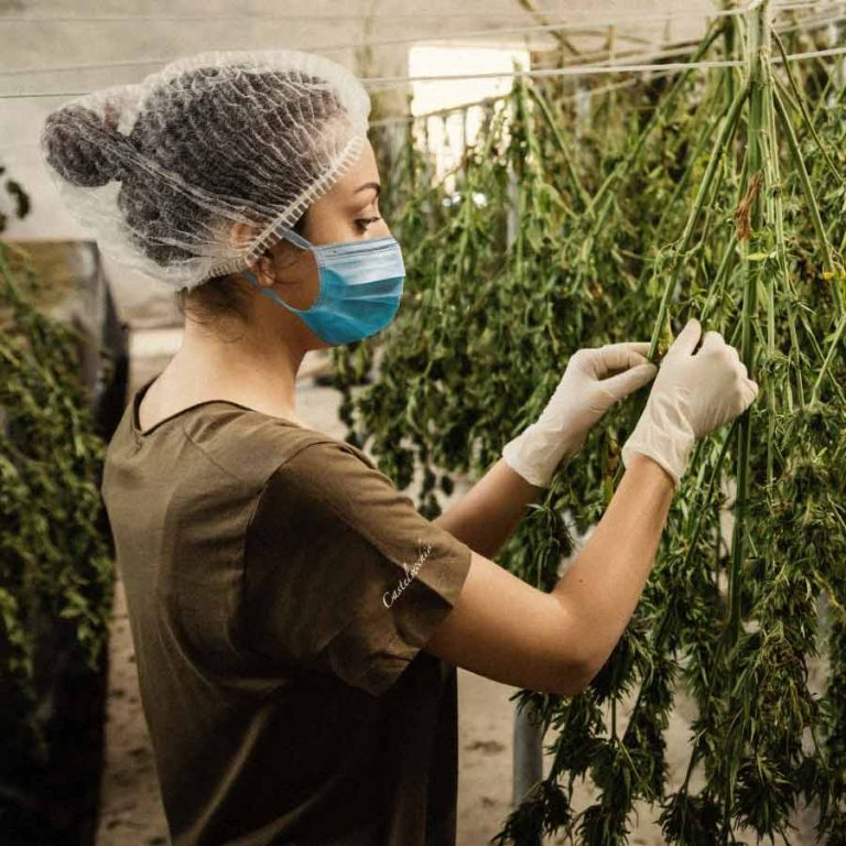 Marijuana Cultivation Security and Protection